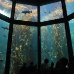 Monterey Bay Aquarium - Interior