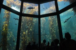 Monterey Bay Aquarium - Interior